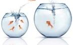 LFB: le point sur les transferts au 20/07/2014